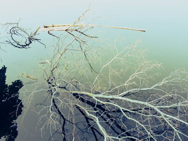 Branches in water